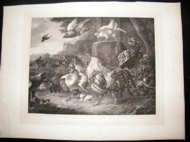 After Melchior Hondecoeter C1840 LG Folio Print. Poultry, Chickens, Birds